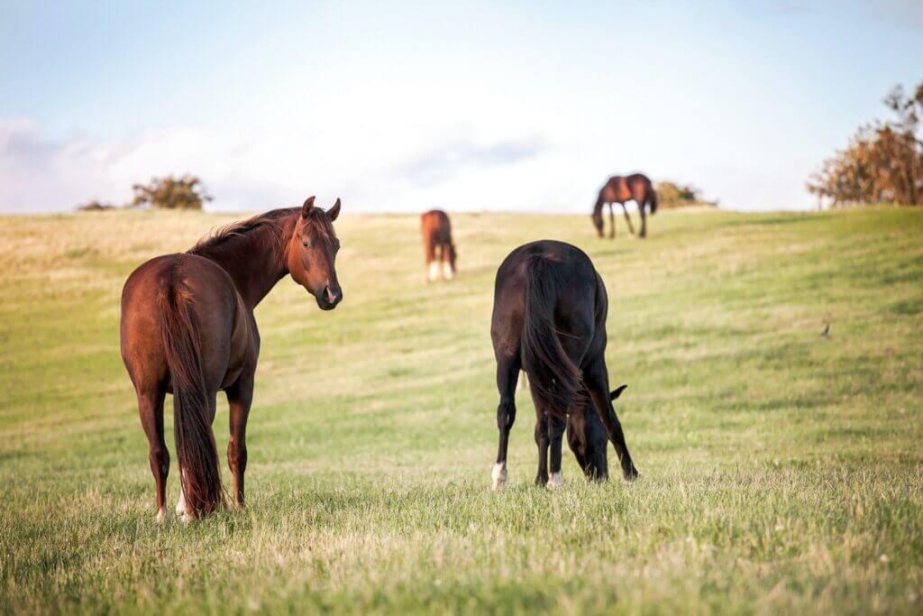 Découvrez comment se débarrasser de la culotte de cheval